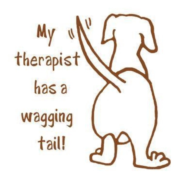 what organizations are certifying therapy dogs in nj? - caregiver ...