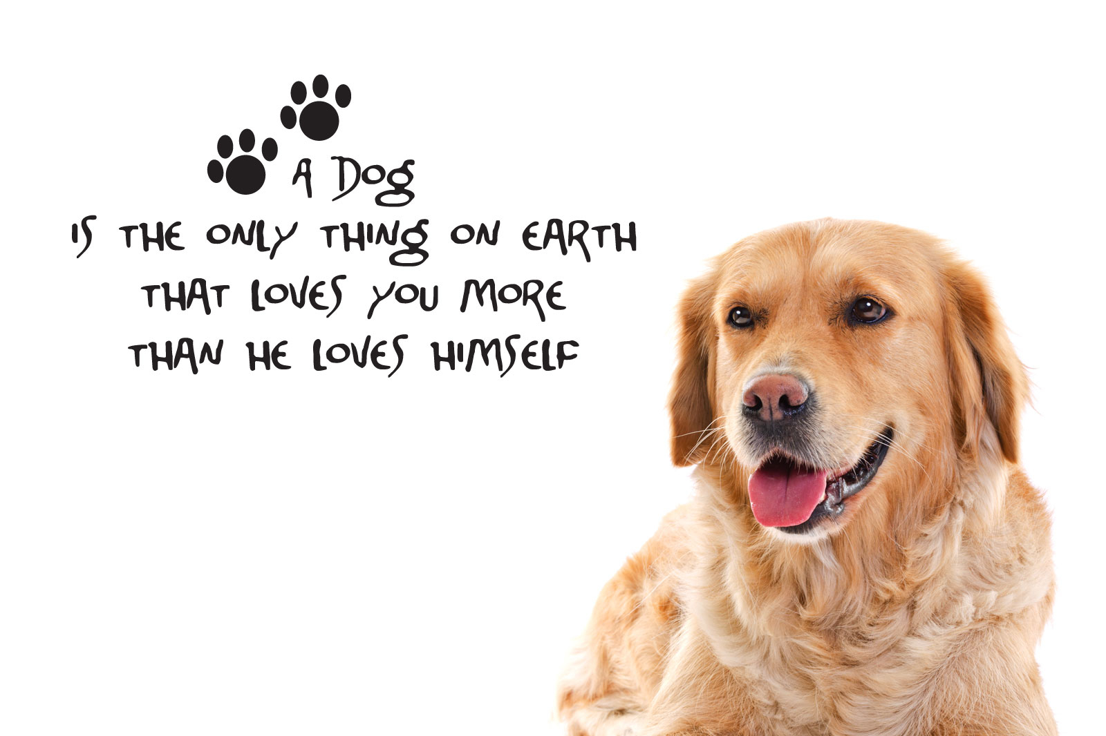 Inspiring Animals Backgrounds In High Quality: Dog Quotesbrook